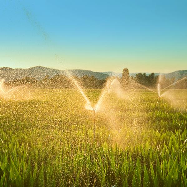 Manejo da Irrigação